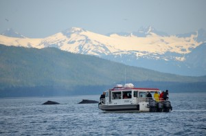 Gastineau Boat and two whales North Pass Juneau 7-13