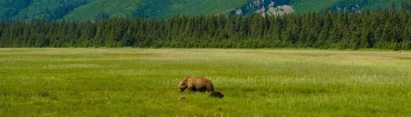 Alaska Experiential