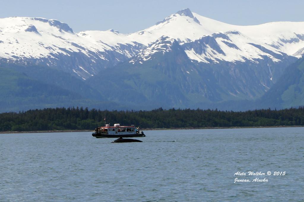 Gastineau Boat and whale 5-15