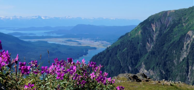 Juneau's Long Summer Days Boost Wildflower Blooms